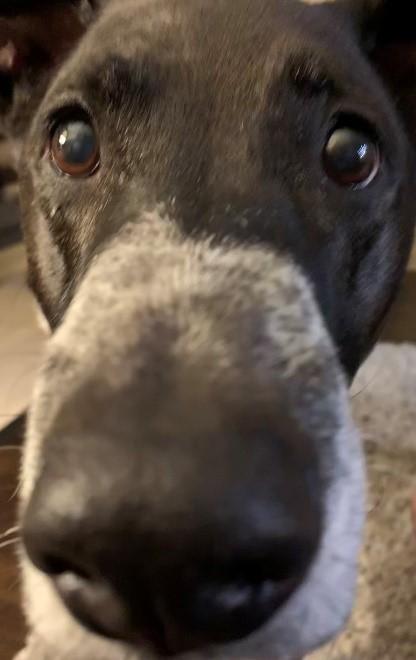 Buddy nose
